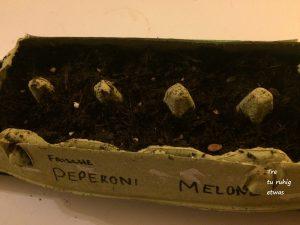 Peperoni, Melone urban gardening