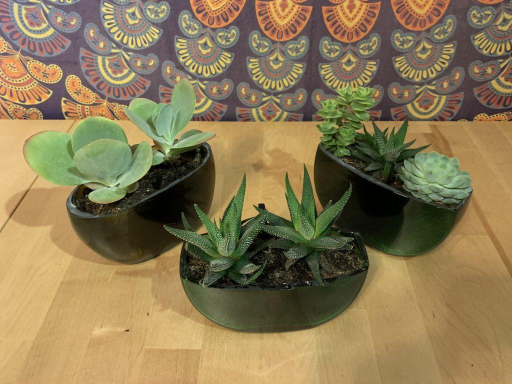 Drei bepflanze Bocksbeutelhälften