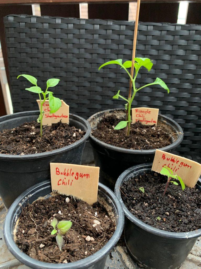 Pflanzenschildchen im Einsatz