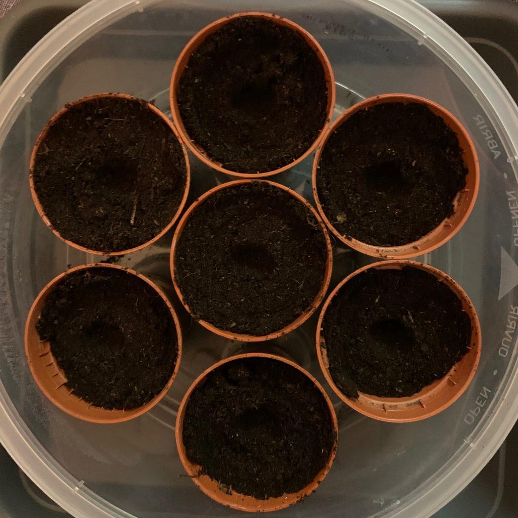 Pflanztöpfchen in DIY Mini Gewächshaus